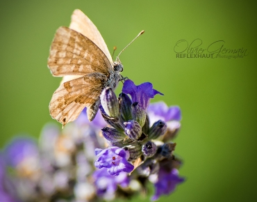 Macro Photographie - Papillon - Cours photo