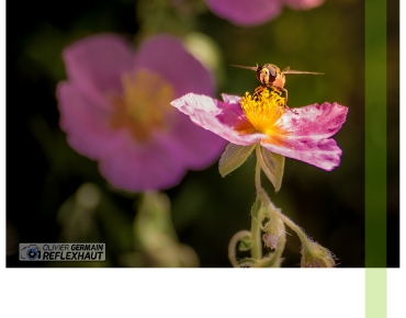 Macro Photographie - Cours photo